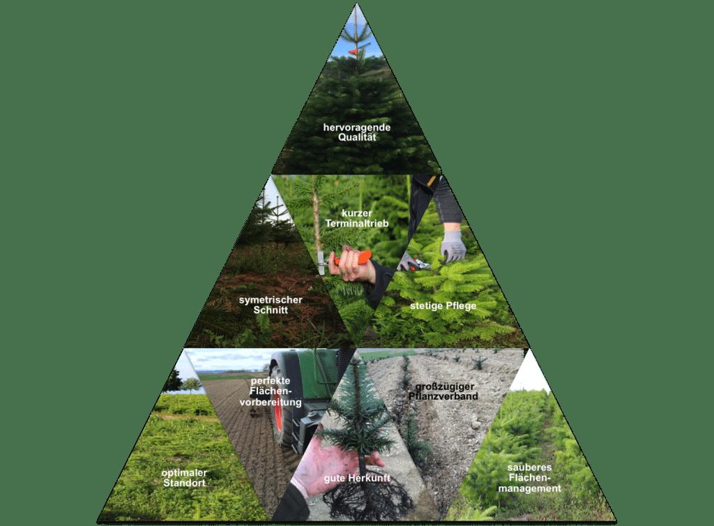 Produktionspyramide Nadelholzkulturen Osebold