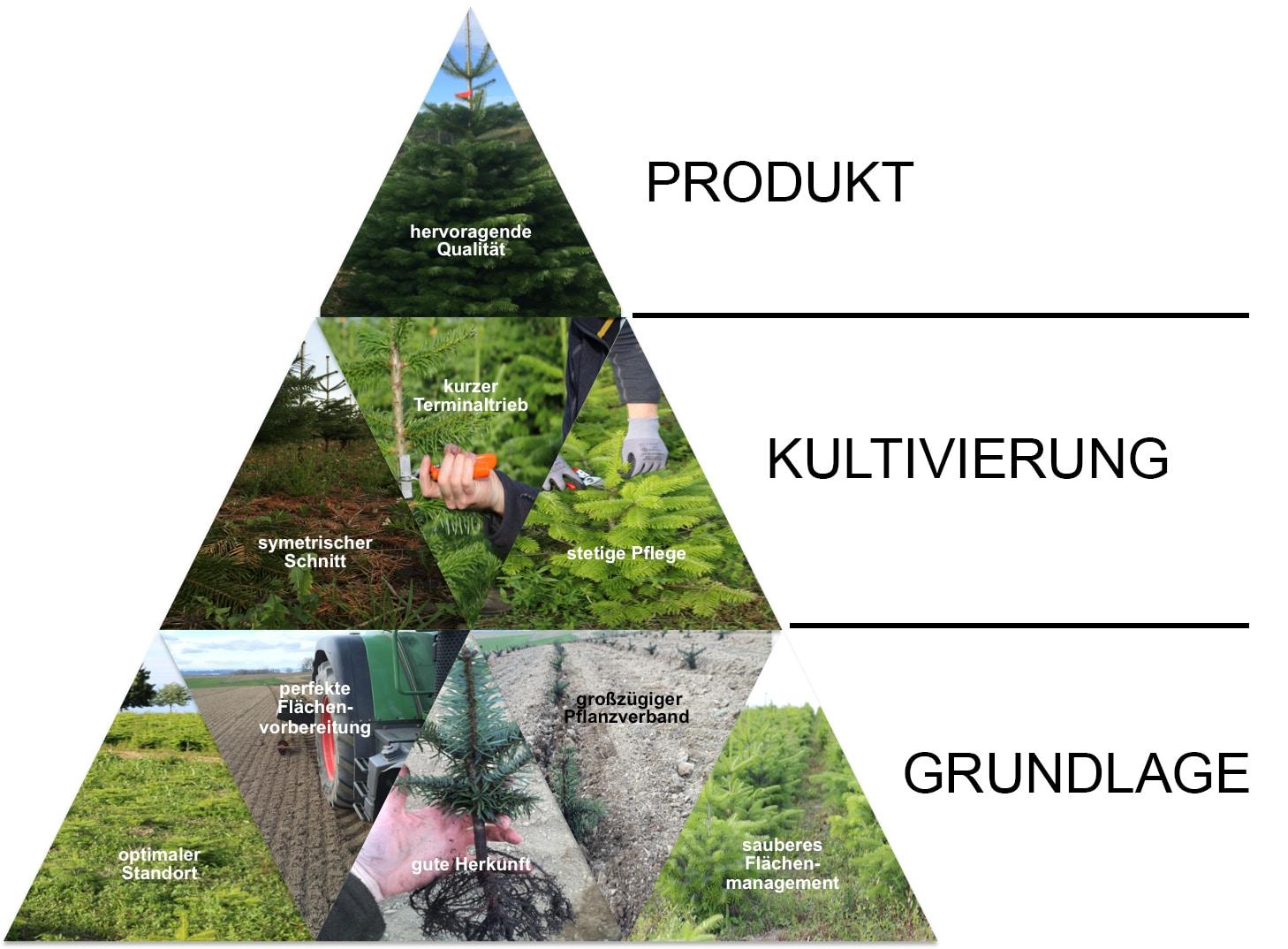 Produktionspyramide Nadelholzkulturen Osebold - Weihnachtsbäume aus dem Sauerland